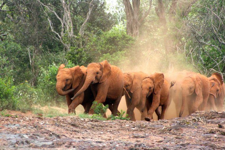Elephant Orphanage 7