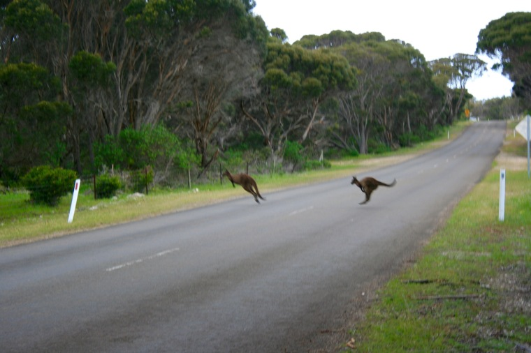 WALLABIE2.jpg